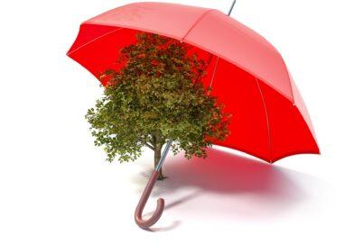 Doradca – zaufany partner czy broker w czerwonych szelkach?
